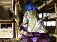 کمک فن آوری چینی به ثروتمند شدن کشاورزان افغان
