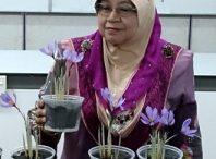 گزارشی از کاشت زعفران در مالزی به روش های نوین