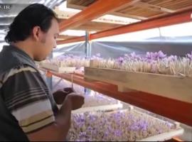 مستند رمز موفقیت ، گفت و گو با علی عباس نیا کارآفرین زعفران