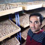 آموزش کاشت زعفران در گلخانه توسط حمید حاتمی نژاد